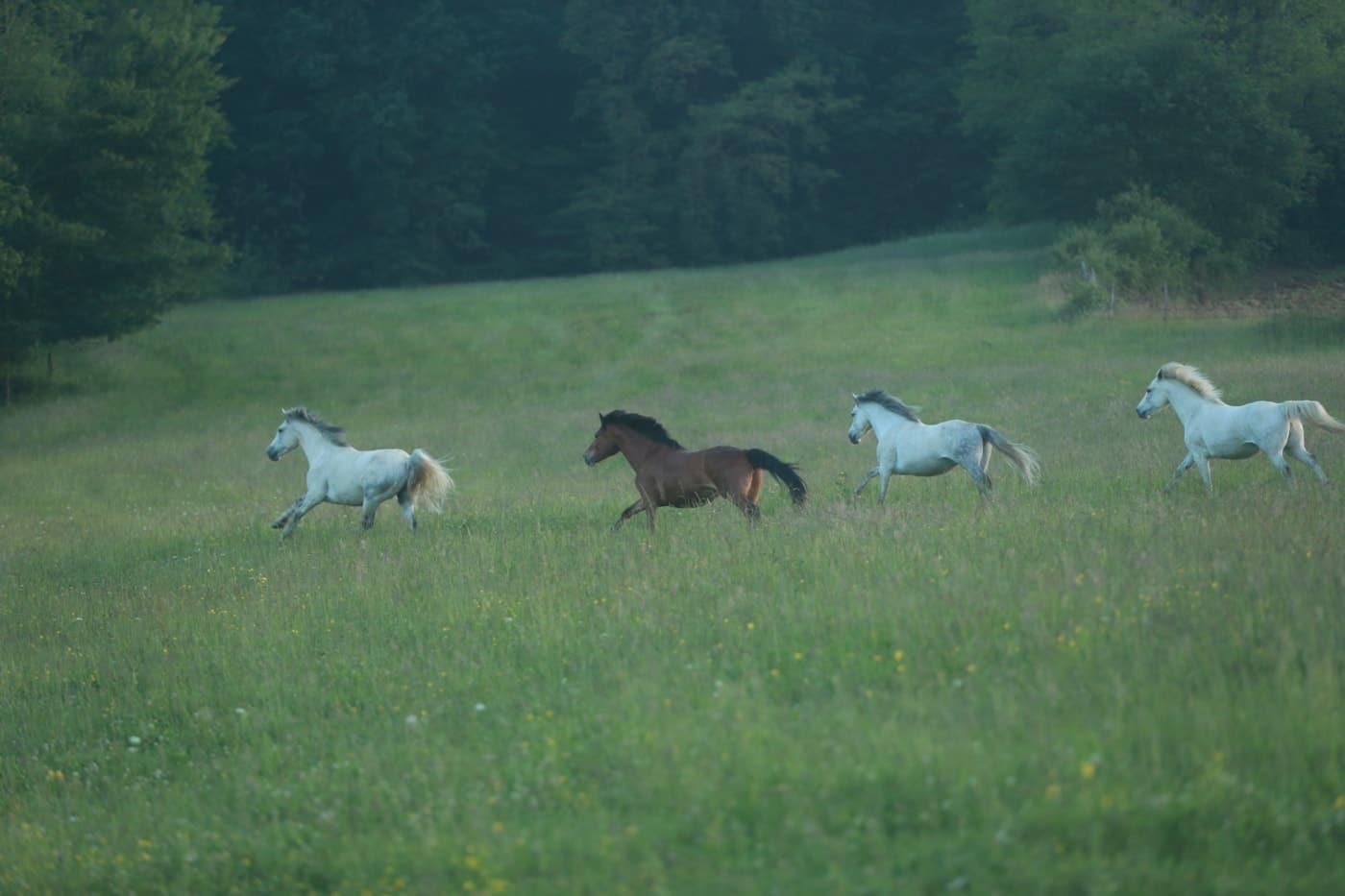 """""""Vacances de rêve à poney"""", les colonies de vacances"""